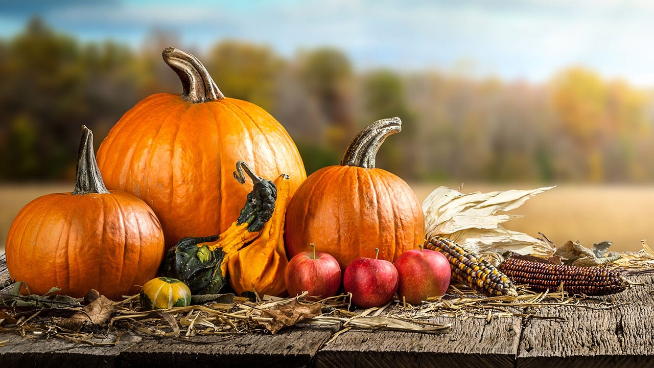 Mini-Tips to Celebrate Halloween and Thanksgiving Sustainably Banner Image