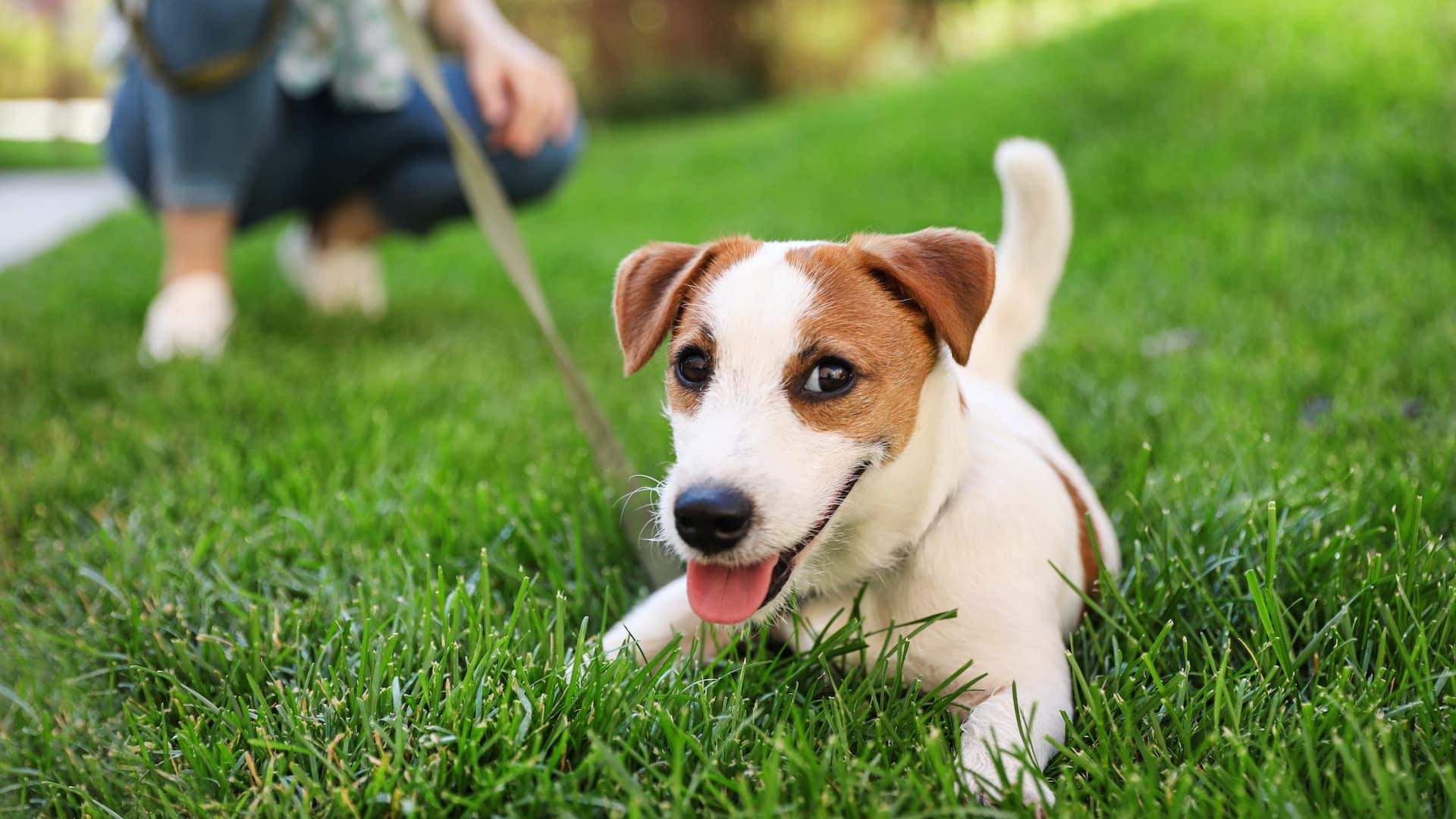 Pick Up After Your Dog Banner Image